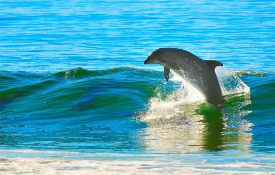 dolphin-1679468_1920