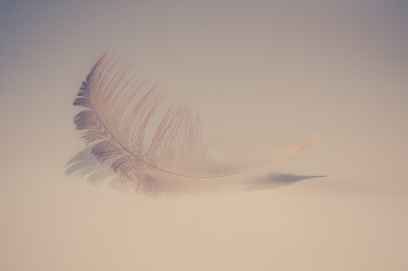 feather-2947022_1920